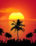tropical, summer, sunset